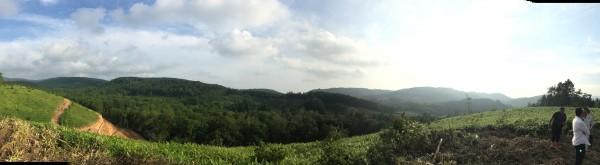 山上からパノラマ